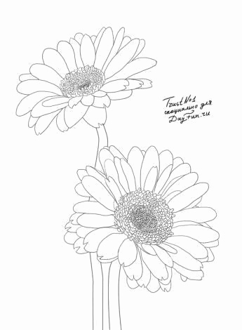 Baum Zeichnung Bleistift Genial How to Draw Gerberas Step by Step 4 Art