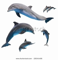 Delfin Bilder Kostenlos Einzigartig 74 Best Sea Life Drawing Images On Pinterest