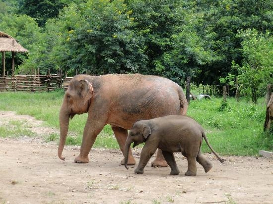 Tier Mit C Am Anfang Genial Dieser Park Und Kein anderer Elephant Nature Park Chiang Mai