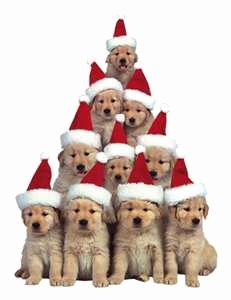 Weihnachtskarten Tiere Einzigartig Golden Christmas Puppies I Would Love to Be In the Middle Of This